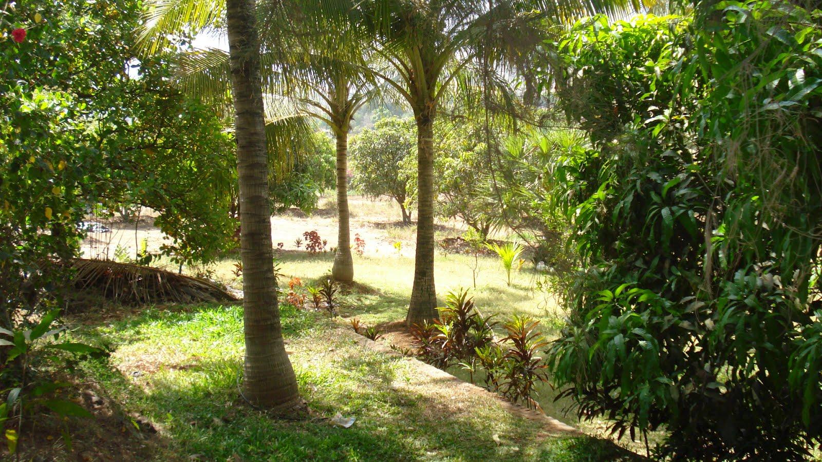 Places Near Mumbai: Rohini farm house at Vasai Virar