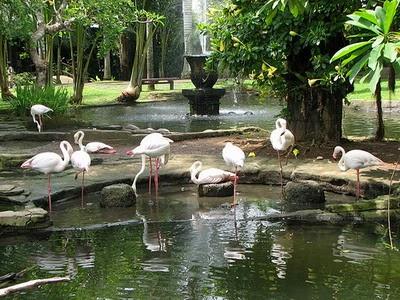 اندنوسيا telaga-Bali-Bird-Par