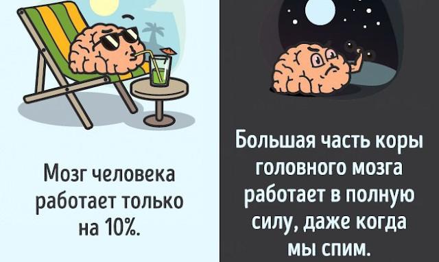12 мифов о теле человека