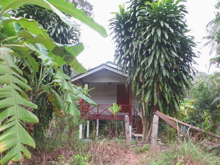 Дом джунгли экономие на деньгах