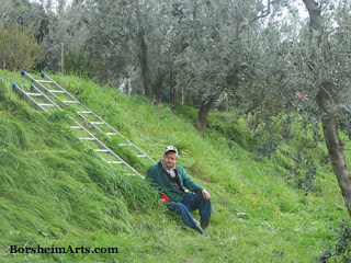 Natalino sits near wooden ladders in Casignano during Olive Harvest, Tuscany, Italy