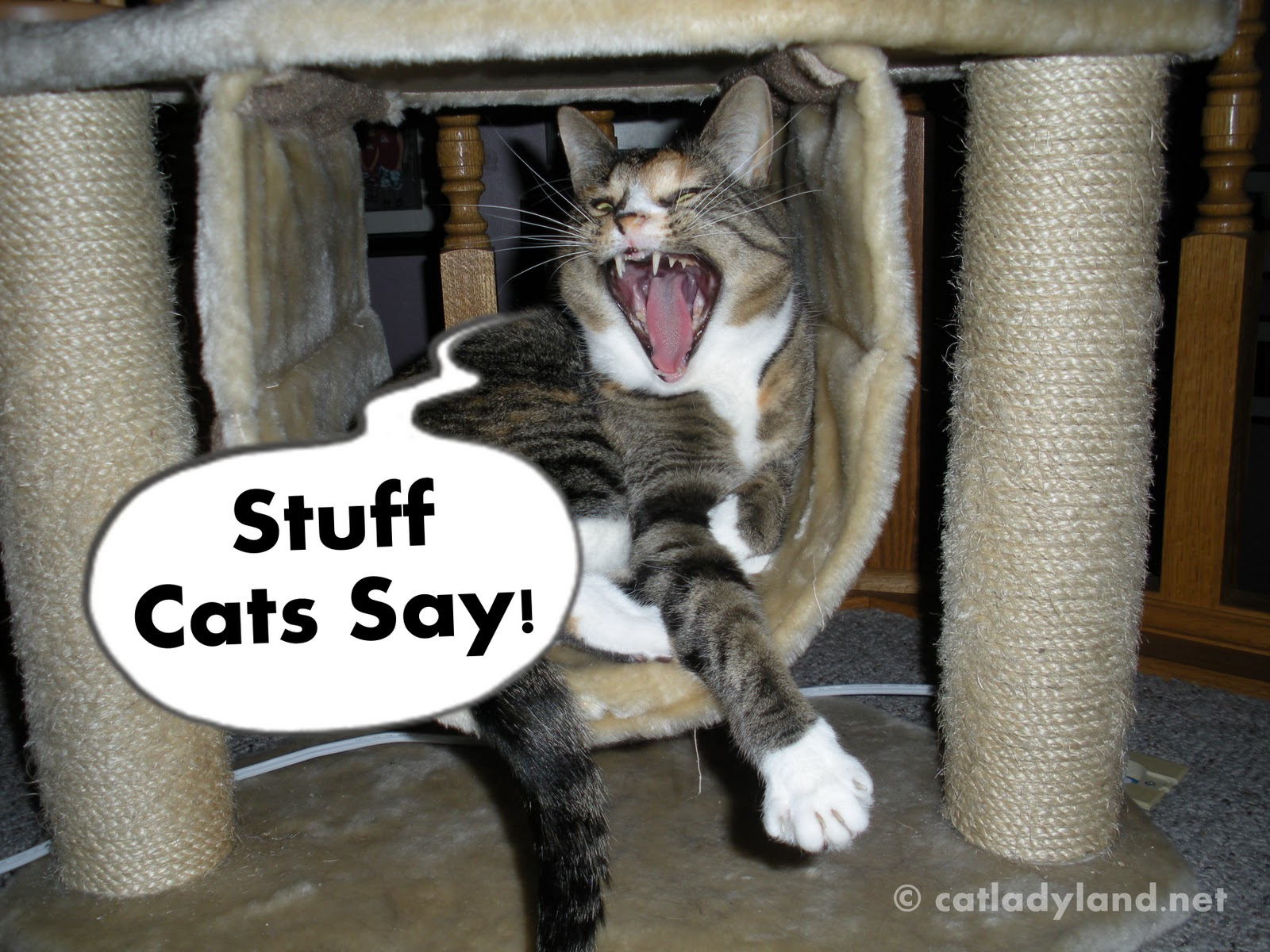 Funny Image Collection Cat And Police Dogs Funny Cat
