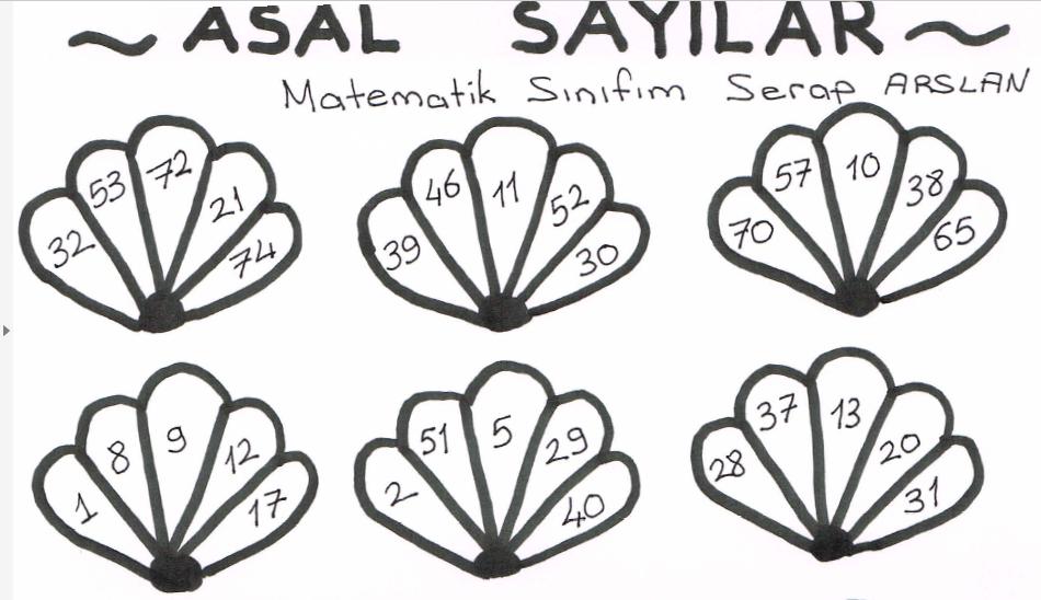Asal Sayilar Deniz Kabuklarini Boyama Sevimli Matematik