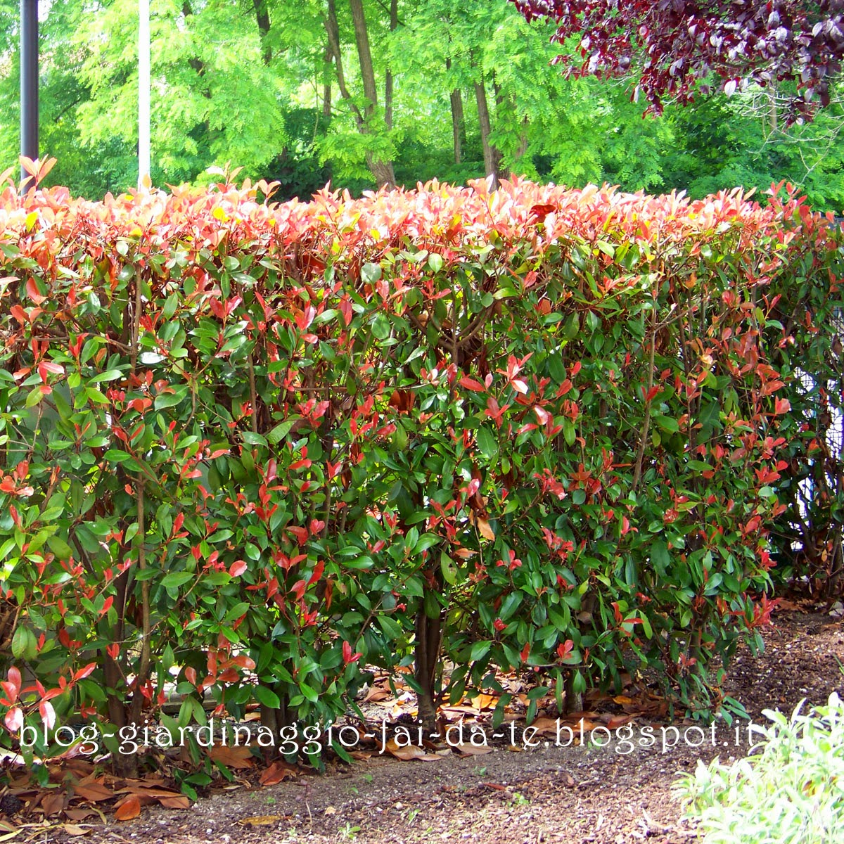 Recinzione Giardino Fai Da Te.Rete Da Giardino Prezzi Tenda Parasole Resistente All Acqua 5 M X