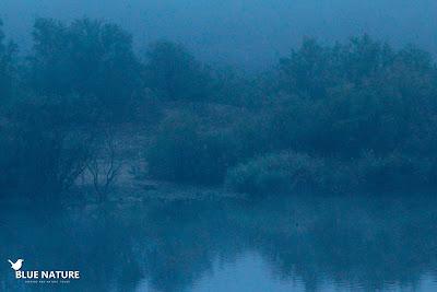 Aspecto del humedal a primera hora de la mañana. La niebla no deja ver nada.
