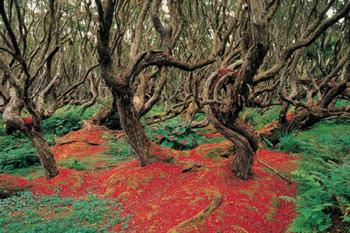 Gambar Hutan Terindah di Dunia 3