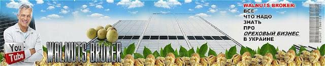Купить саженцы грецкого ореха сорт Кочерженко в Украине, 0985674877, 0957351986, Walnuts Broker