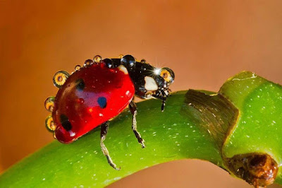 Catarinas Mariquitas Ladybugs Ladybird Wallpapers