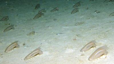 Mineral, Organisme dan Endapan Laut
