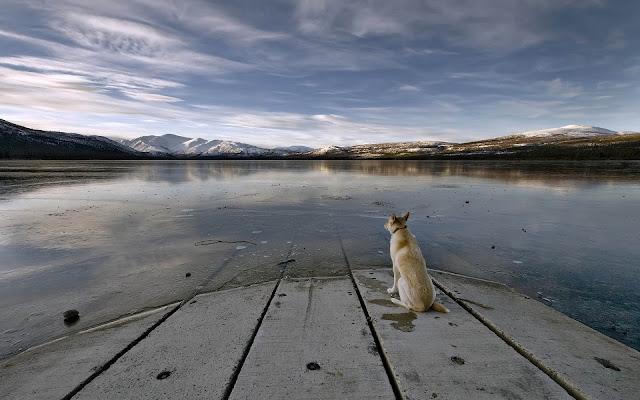 Hond kijkt uit over bevroren meer