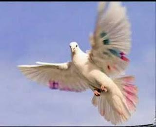 https://aynahikayesi.blogspot.com.tr/
