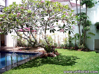 Tropical Garden Design Idea