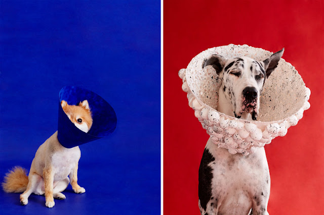 All Good Dogs: Photographer Transforms Canines' Cones From Shame To Glam