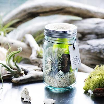Vintage Glass Jar Terrarium Kit