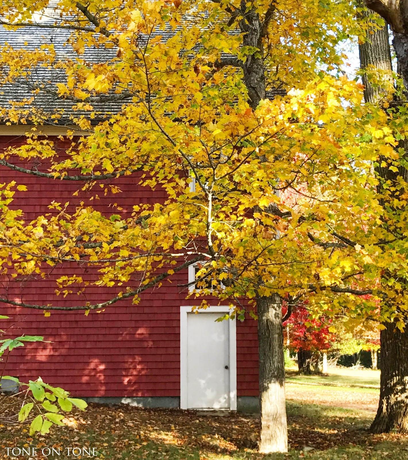 Tone on Tone: Autumn in Maine