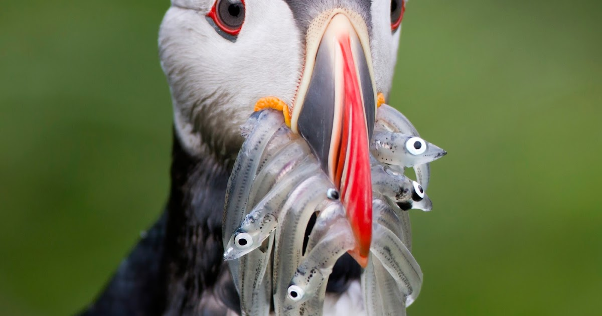 15 Types of Ocean Birds – Characteristics
