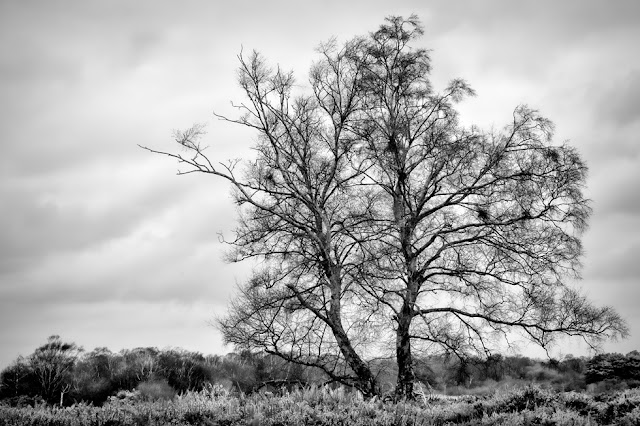 Large tree in beautiful monochrome on the Dorset coast