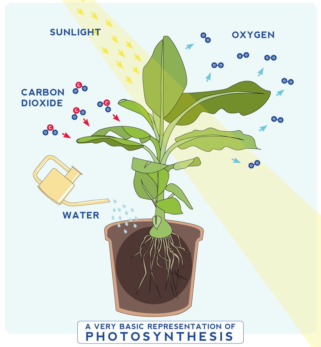 House of thol 6 reasons to get houseplants now for 0 4 soil carbon