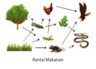 Soal Evaluasi Interaksi Dalam Ekosistem ; materi ajar ipa smp kelas 7 semester 2 kurikulum 2013 plus jawabannya