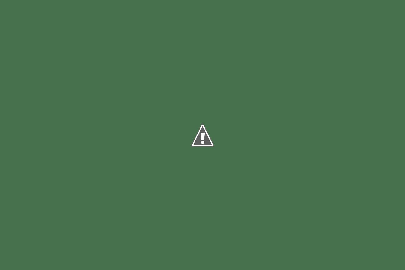 live love quilt free stitching pattern