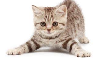 cara menjaga anak kucing 1 bulan,cara menjaga anak kucing baru lahir tanpa ibu,cara menjaga kucing,penjagaan anak kucing kematian ibu,