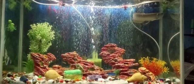 Akuarium Ikan Arwana dan Cara Merawatnya