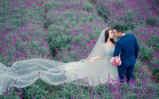 Lavender harvest season in Lao Cai 5