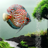 3D Fish Screensaver Free Virtual Fish Aquarium