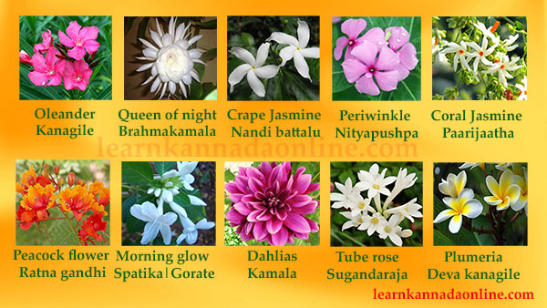 Learn Kannada Online Flower Names In Kannada Learn Flower Names