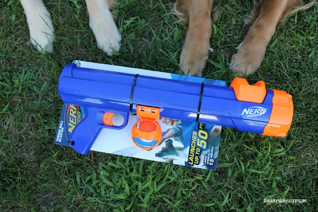 healthy active dogs playing fetch with nerf dog ball blaster dog toy