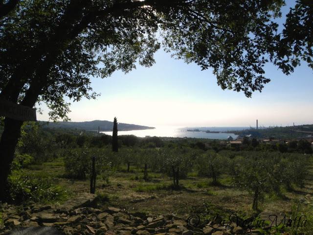 panorama dall'uliveto di Gioacchino Fiorosso