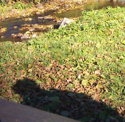 Illusztráció vershez, lagymatagon pislákoló napsütésben árnyékot vető kabátos emberi alak egy tavaszi áradásban faleveleket sodró patak partján.