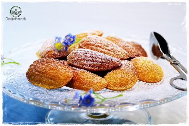 Gartenblog Topfgartenwelt Buchtipp Französisch Backen mit Rezept für Madeleines: Madeleines selber machen