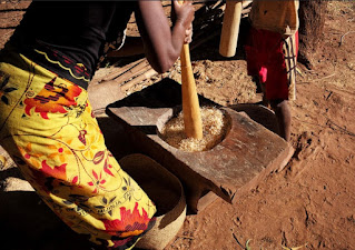 Using a pestle and mortar to prepare a rice meal in Atsimo-Atsinanana the Republic of Madagascar.