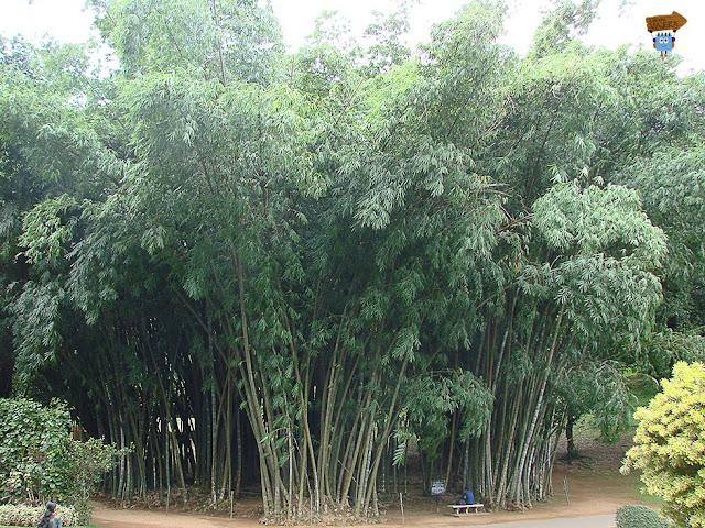 Jardín botánico Peradeniya