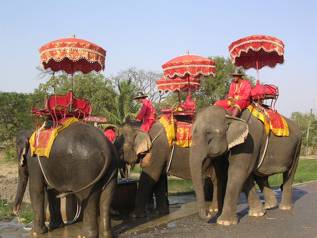 The Truth Behind Elephant Tourism Travel Pastel Dreams And