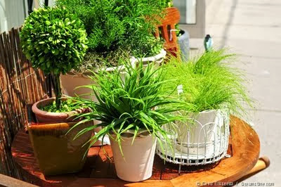 Choosing a Container for Growing a Plant ~ Gardening Tutorials