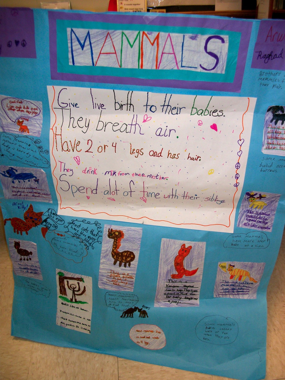 News From The Eagle S Nest Learning About Mammals
