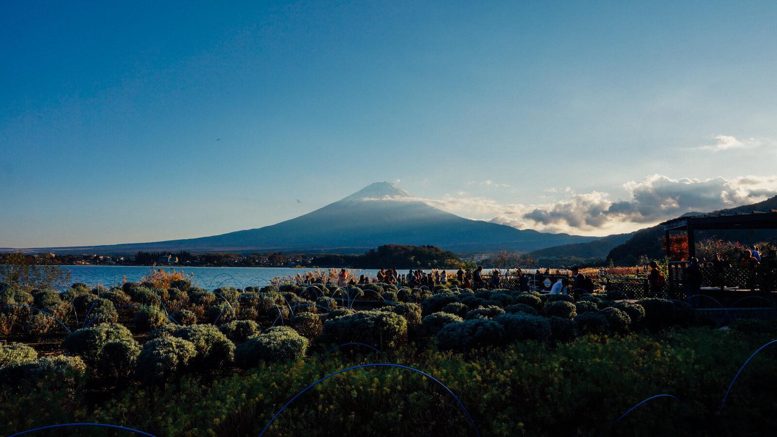 富士山拍到手軟!河口湖賞楓自駕行程(下)