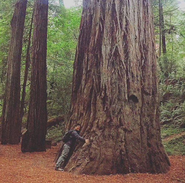 Large redwood at Jedediah Smith Campground (Jedediah Smith Redwoods State Park)