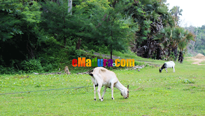 Nama-Nama Binatang Bahasa Madura