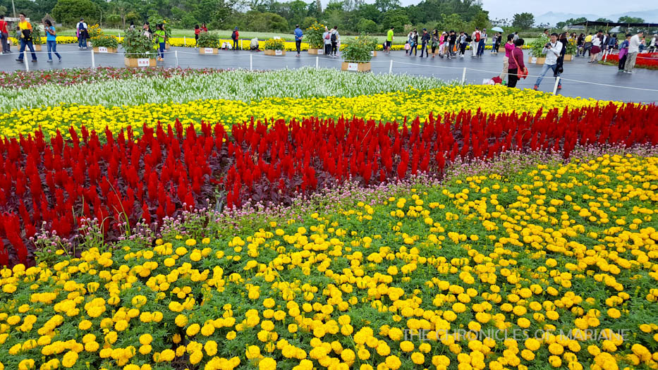 The Chronicles of Mariane: Xinshe Flower Festival in