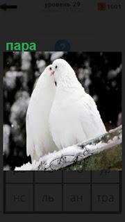на крыше сидят пара белых голубей