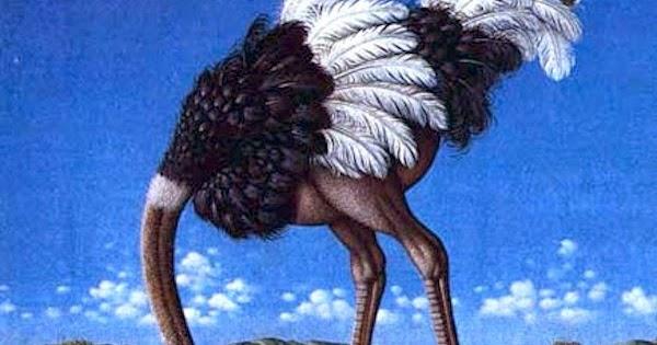 μεγάλο πουλί μανιτάρι κεφάλι σκούρο μαύρο πορνοστάρ