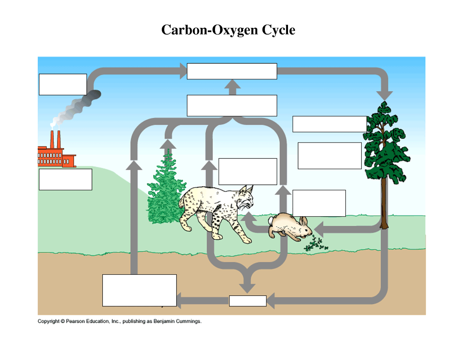 Basic Carbon Cycle Diagram 4 Wire Thermostat Wiring Nitrogen Blank Free Engine Image