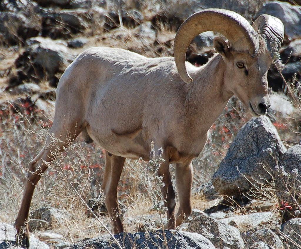 Awakenings Nevada Running With The Wild Horses