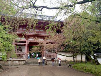 醍醐寺の新緑