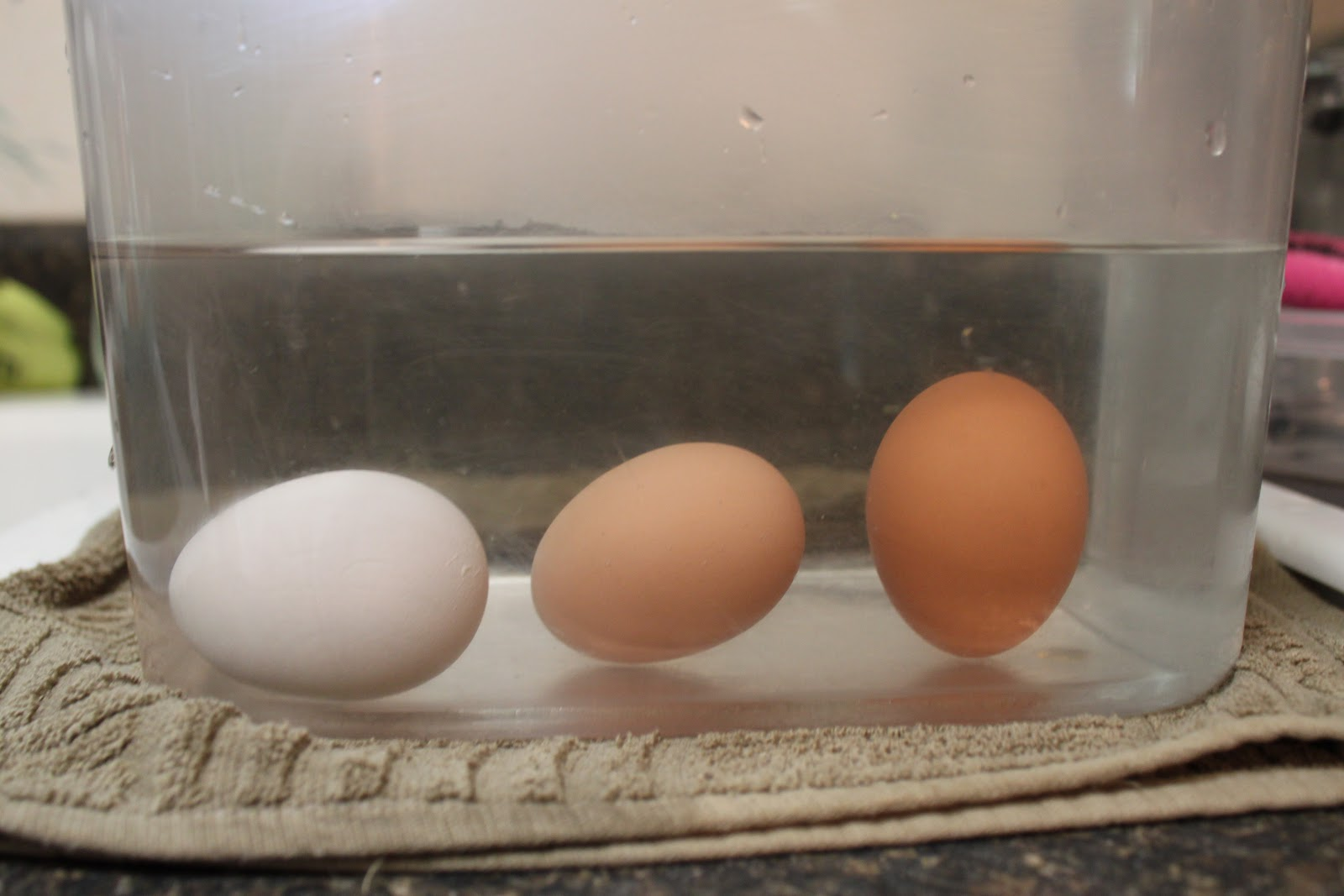 How to know if an egg is fresh or stale? - Number Of Things