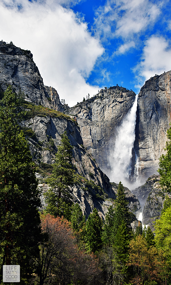 I'm sharing my secret to seeing Yosemite in a day! I'll fill you in on how we saw many of the favorite attractions in Yosemite National Park all in just one day! Add this to your bucket list! #LTGtravels