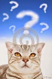 foro-de-preguntas-y-respuestas-sobre-gatos